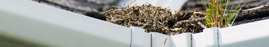 Gutter-filled-with-grass
